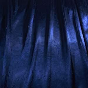 Bichon Midnight Royal