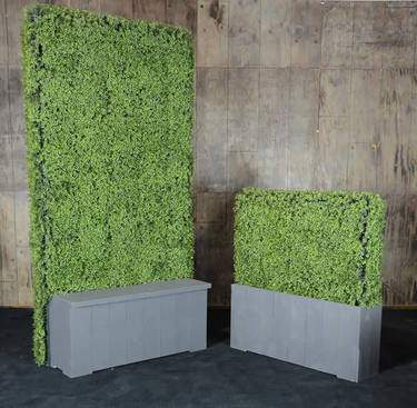 Boxwood Divider Wall 4'x8'